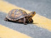 Paragliding and turtle-walking: breaking Rome's lockdown in style