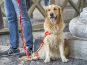 Animal culture in Rome: Not just a city for cats