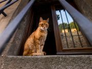 Italy: cat dies from mystery bat virus in Arezzo