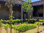Pompeii's lost gardens bloom again