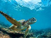 Rome: despair as turtle eggs fail to hatch on beach