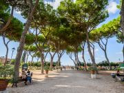 Rome risks losing 50,000 pine trees to invasive insect