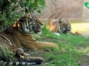 Covid-19: Rome zoo risks closure as visitor numbers plummet