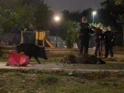 Rome police kill family of wild boar in kids playground near Vatican