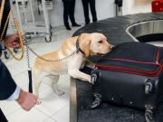 52 kilos of cocaine and heroin were seized at Fiumicino airport in Rome