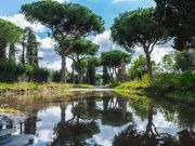 Rome takes steps to save its pine trees from parasite insect