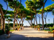 The race to save Rome's pines before it's too late