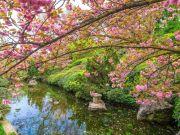 Hanami: Rome's Botanic Garden celebrates the beauty of spring cherry blossoms