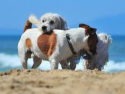 Baubeach: Rome's dog beach reopens for the summer