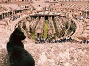 Colosseum bids farewell to mascot cat Nerina
