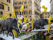 Italian farmers protest in Rome over wild boar emergency