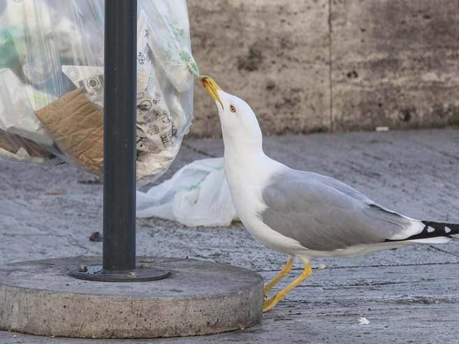 Rome to launch anti-seagull bins - Wanted in Rome